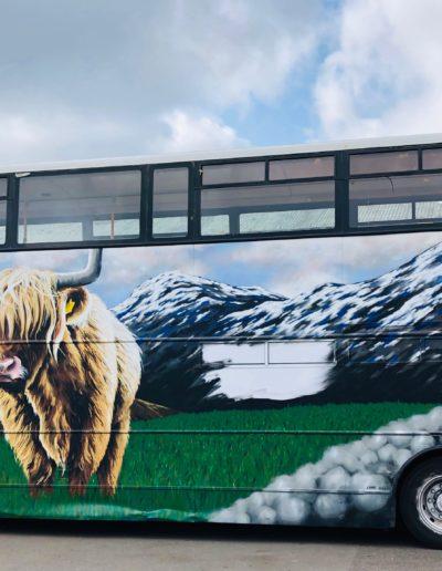 Highland cow on bustourant